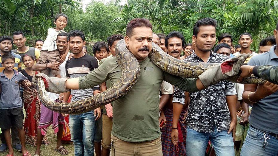 Pour un selfie, il a faillie se faire étrangler par un python